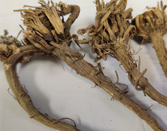 Dried Shatavari Roots In Howly